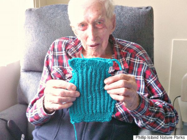 Alfie, 109, knits sweaters for penguins