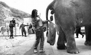 Elephant Poo Beer