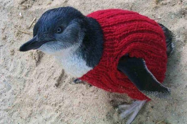 Little Penguin in hand-knitted jumper