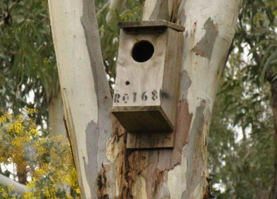 Possum Nest